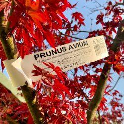 Etichetta speciale per piante